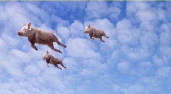 丰厚资本杨守彬:风口上的猪绝大多数都掉到锅里熬汤了