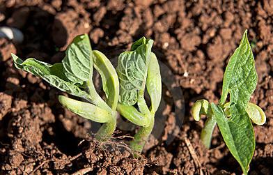 豆瓣前运营总监亲授:如何获取高质量的种子用户?