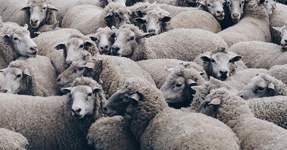 互联网黑产:那些职业羊毛党到底如何月赚几十万?