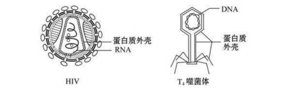 a42913 病毒学中的裂变增长奥义:用户增长全链路拆解
