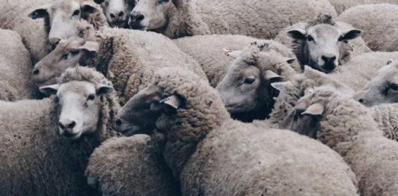 羊毛党专业八级选手,是怎么屠杀运营活动的
