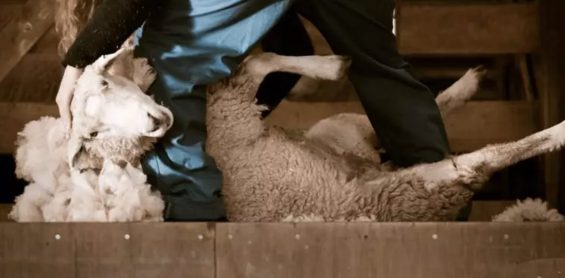 a118 拒绝羊毛党:运营同学必看的防薅羊毛技术完全解读