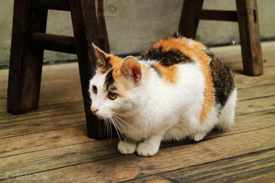 67 这家猫咪酒店活跃用户年消费7000+,开张3个月就盈利
