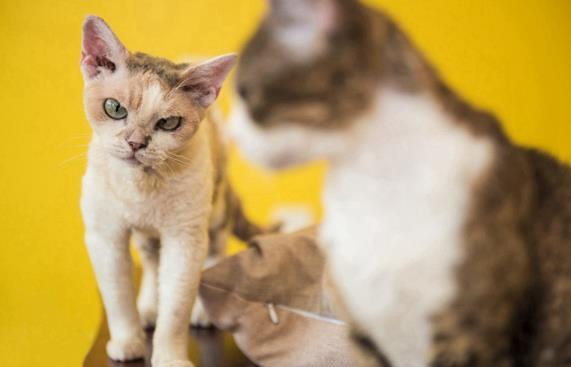 1314 新猫粮团队如何用6万私域好友,做到GMV增速超300%?